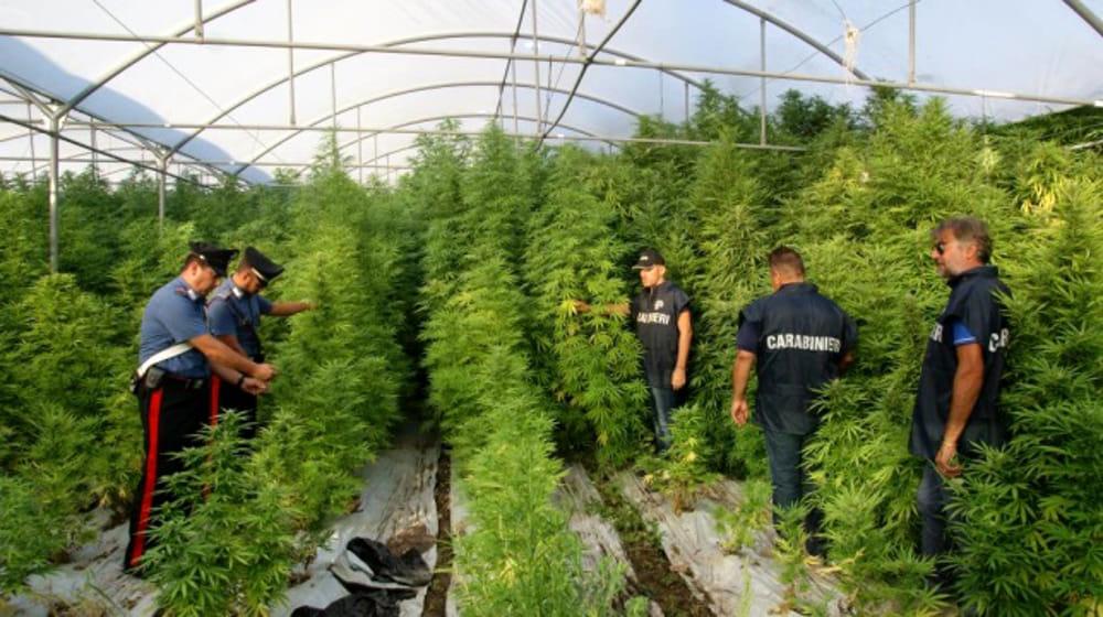 L'orientamento della Cassazione in merito alla coltivazione di marijuana ad usopersonale.